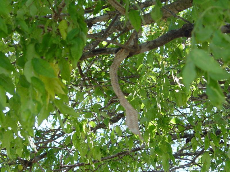 Snake in tree