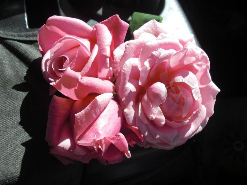 Truck roses