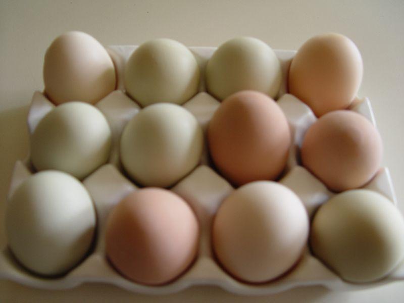 Snake eggs