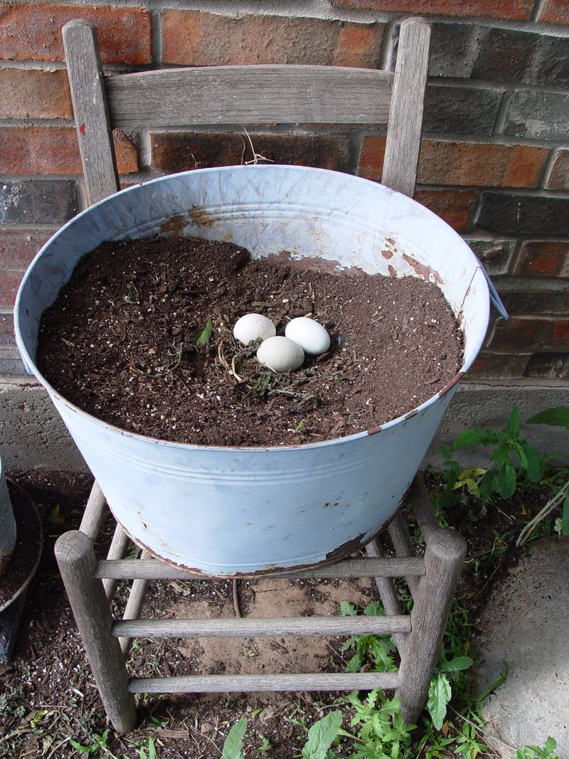 Eggs in bucket:pot